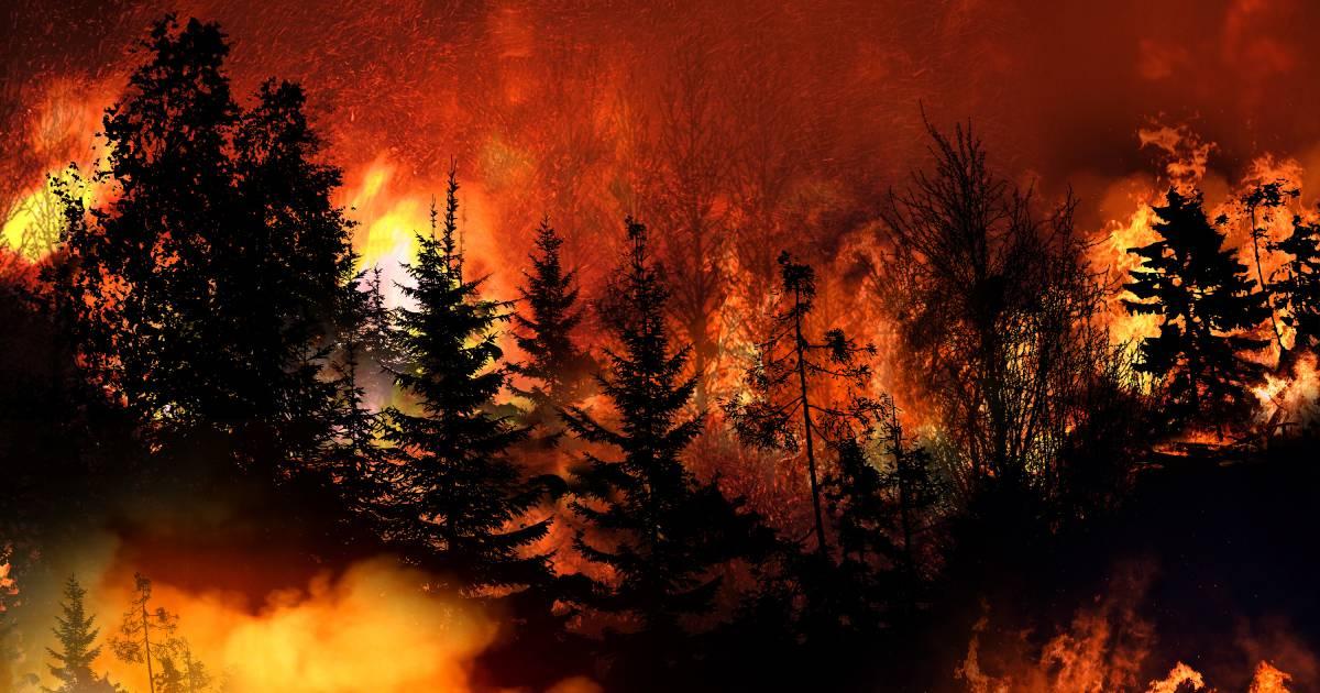 A wildifire burning through a forest