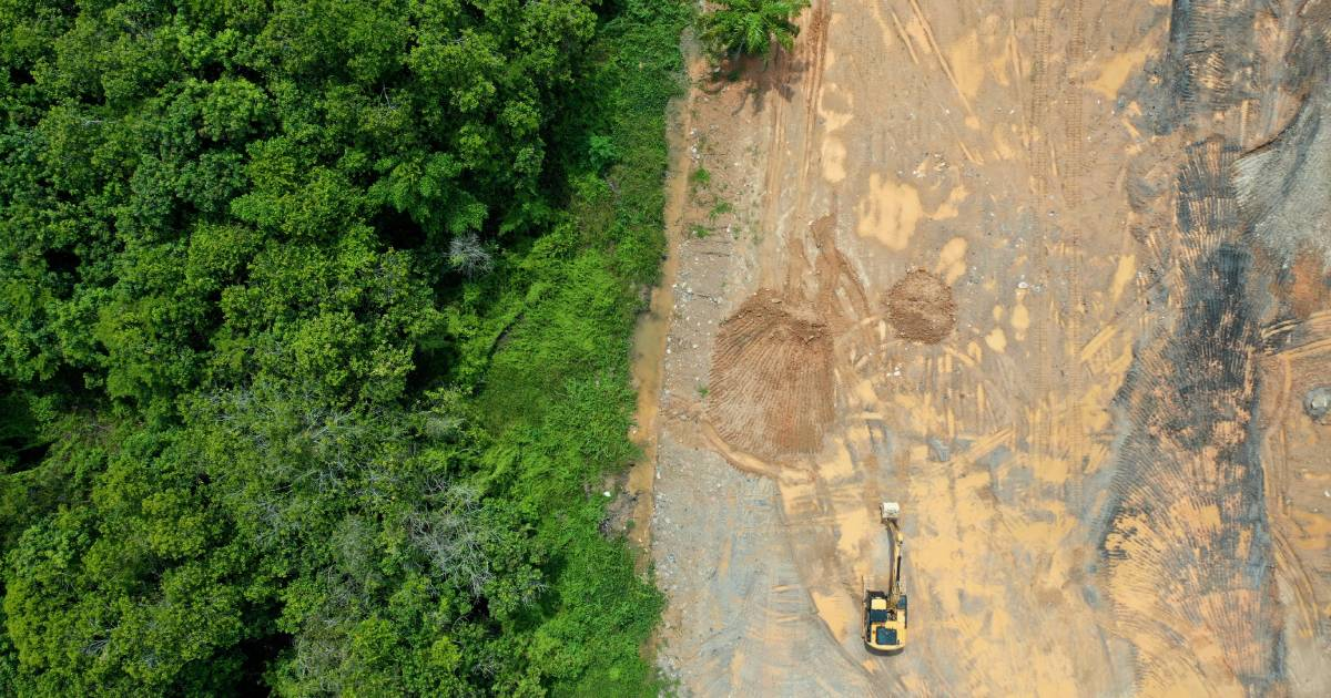 An aerial photo of forest cut down causing climate change