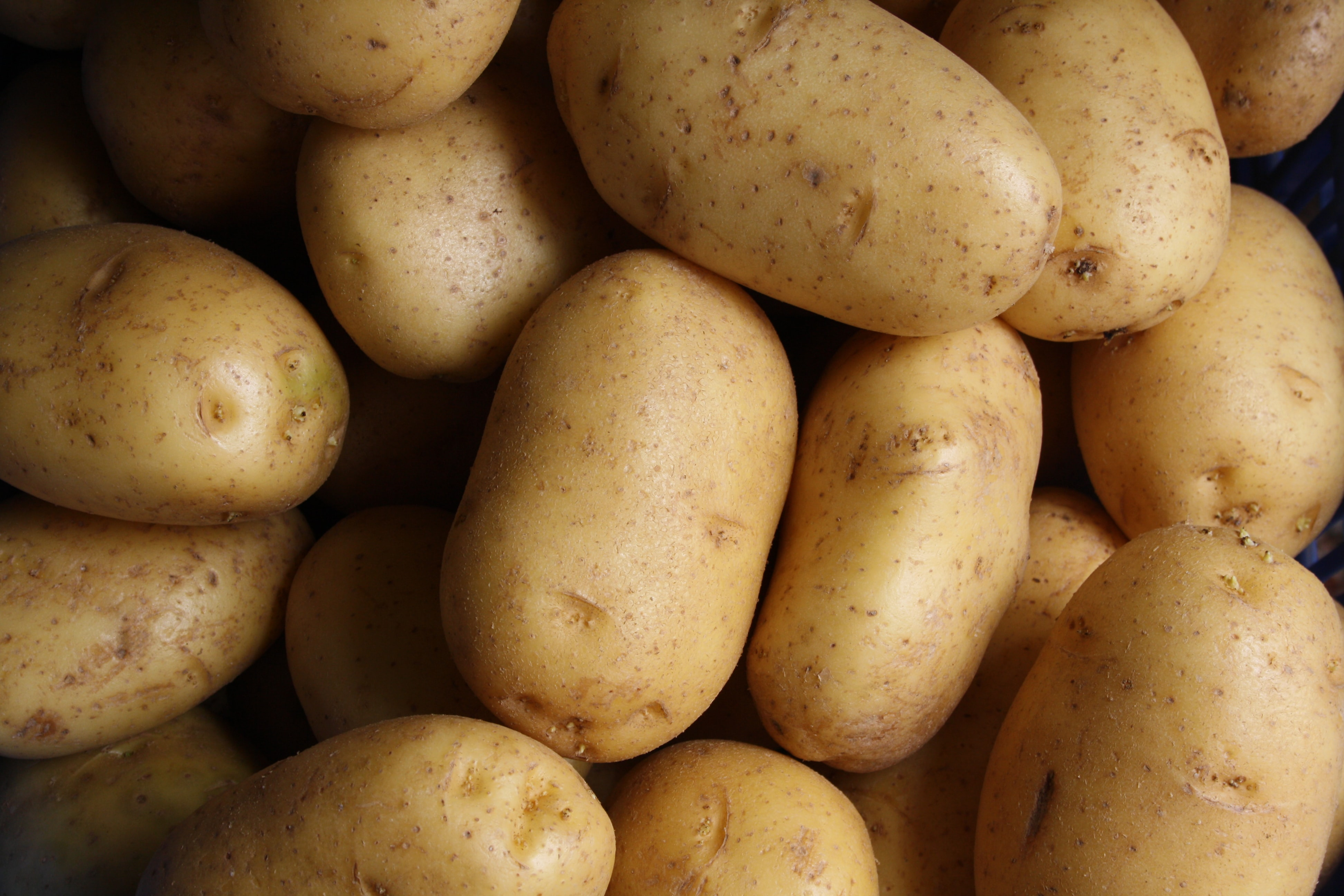 A crop of potatoes. (Photo by Lars Blankers on Unsplash)